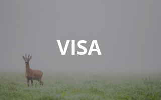 Study in Sweden - Visa
