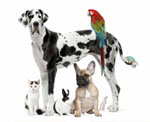 Veterinary & Animal Care