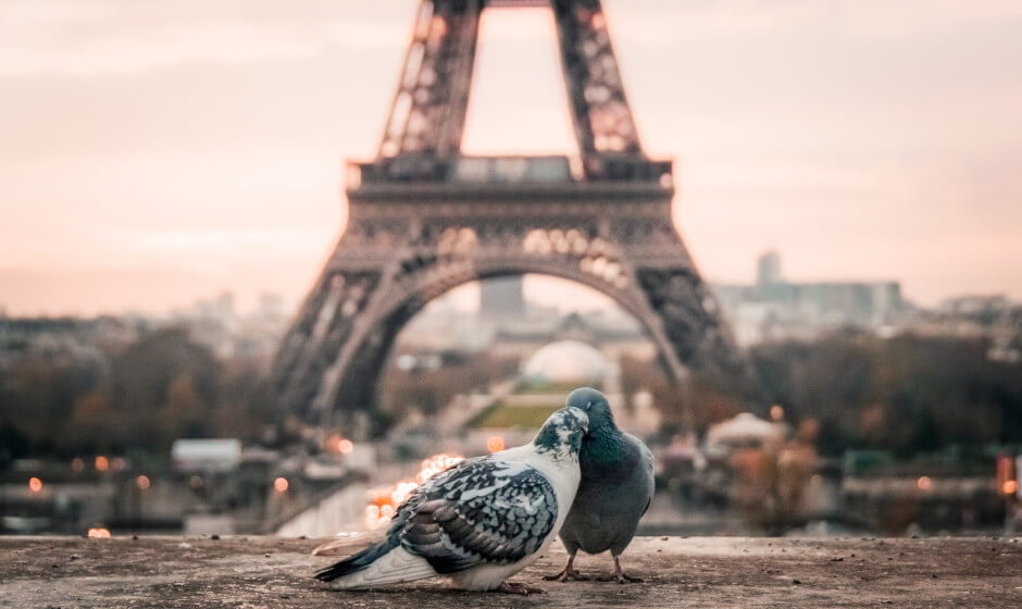 Eiffel Tower with pidgeons - french