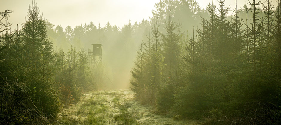 Jakttorn i skog