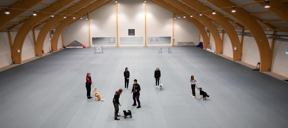 Hundskötare - Vuxenutbildning