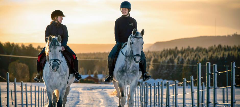 Hästskötare - Vuxenutbildning