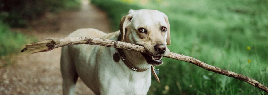 Eläinavusteinen valmentaja – Partners Dog® 30 op / Oppimiskeskus Kainula