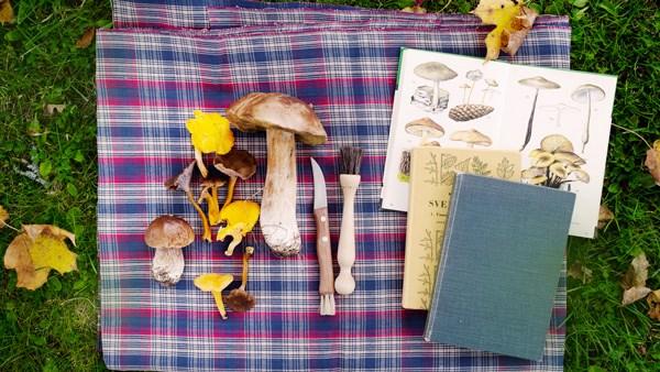 Svampar och svampböcker på en handduk på gräset