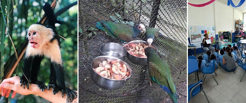 dyreliv på costa rica