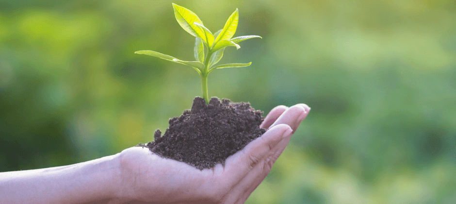 MSc BOOST - Biocontrol Solutions for Plant Health