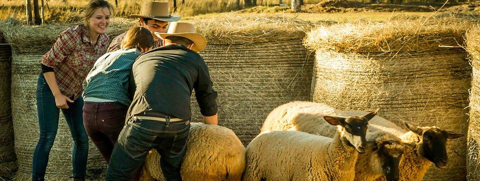 Jobba på gård i Australien