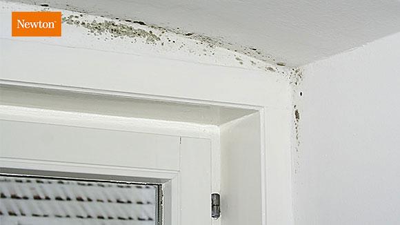 Kurs i fukt och mögel och de vanligaste källorna till skador förorsakade av fukt och mögel.
