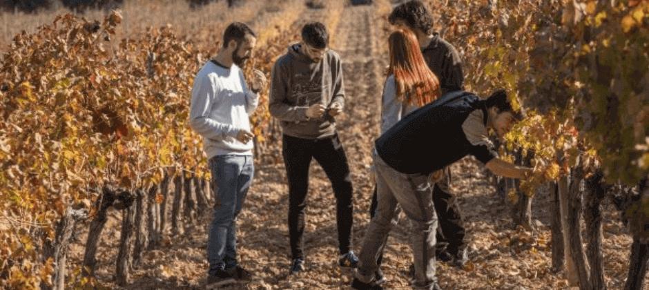 Wine Tourism Innovation (WINTOUR)