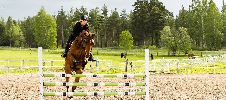 Naturbruksprogrammet, Djur: Häst