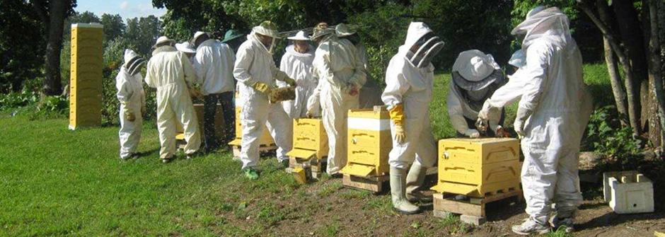 Mehiläistarhaajan koulutus