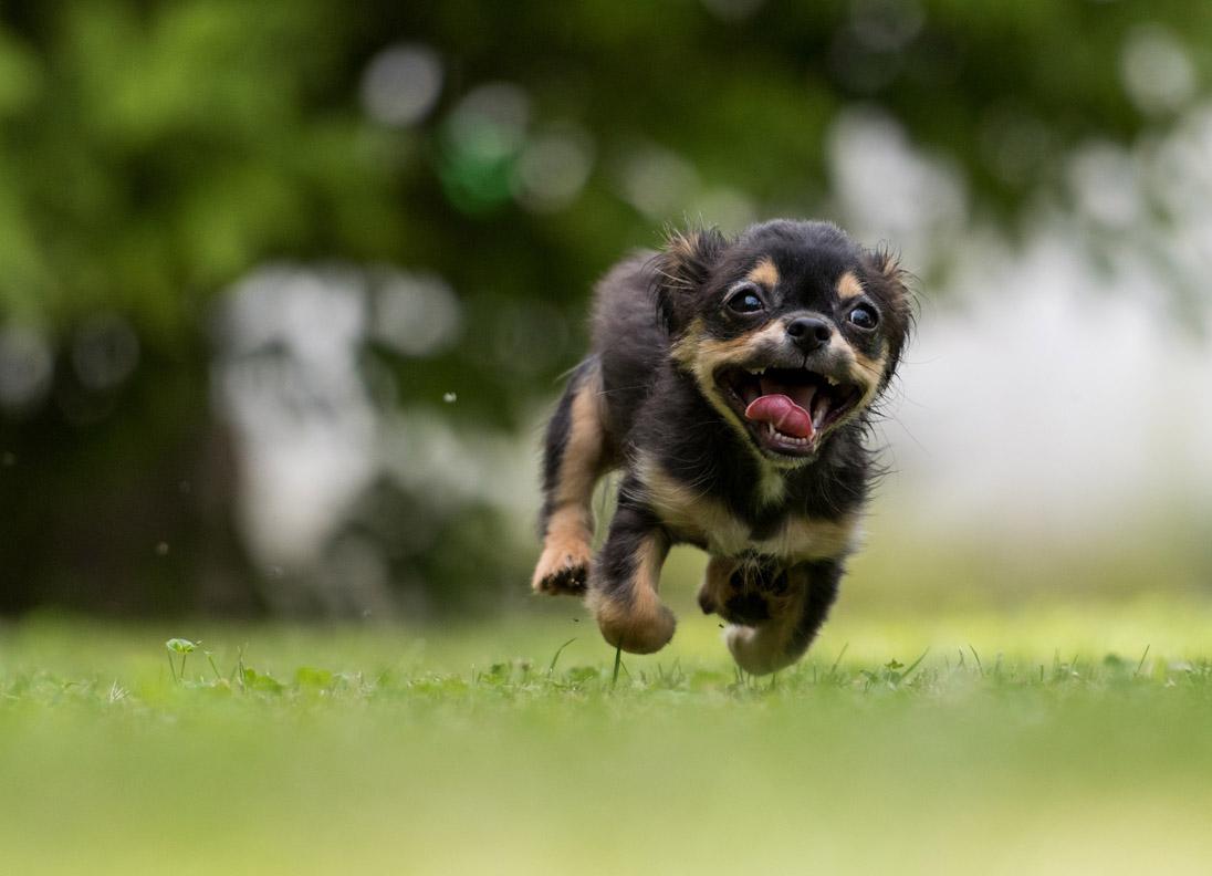 Glad springande hund