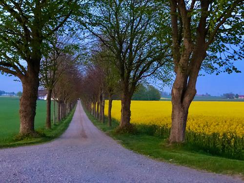 Ateljén ligger i det vackra jordbrukslandskapet strax söder om Simrishamn.