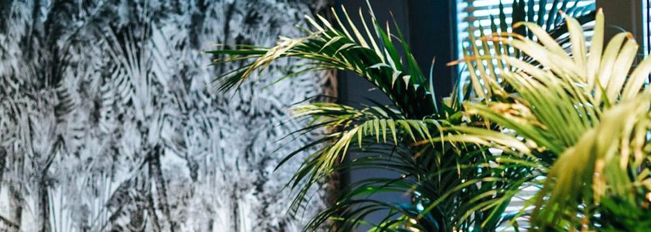 Kuvassa viherpalmu harmaalla taustalla
