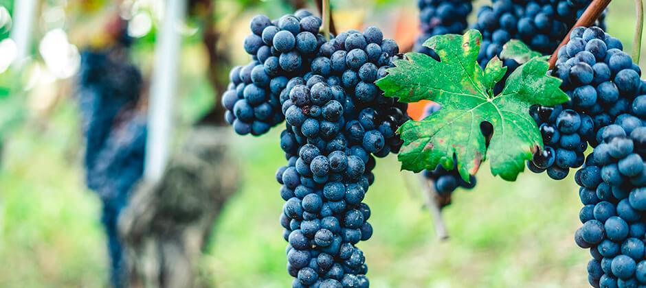 sommelier grundkurs gamla världen vin