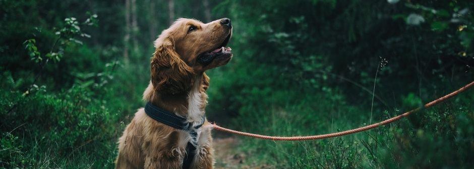 Eläinavusteinen valmentaja -koulutus