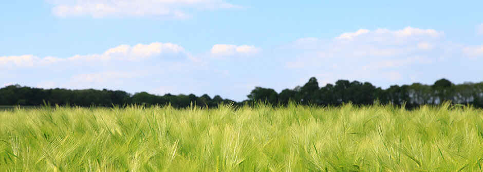 Biotalouden liiketoiminnan kehittäminen