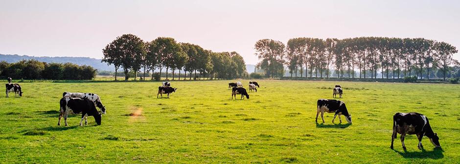 Maatalousalan perustutkinto | maaseutuyrittäjä
