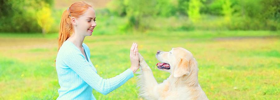 Eläintenhoitajan Ammattitutkinto