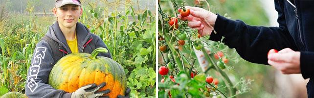 Naturbruksprogrammet, Trädgård
