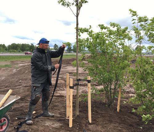 Arbetsledare – Hållbar grönyteförvaltning