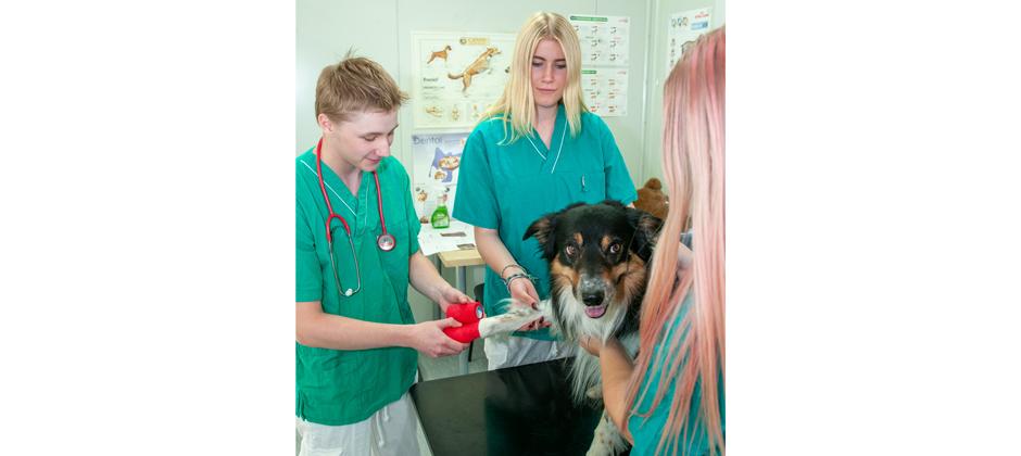 Naturbruksprogrammet, Djurvård: Hund