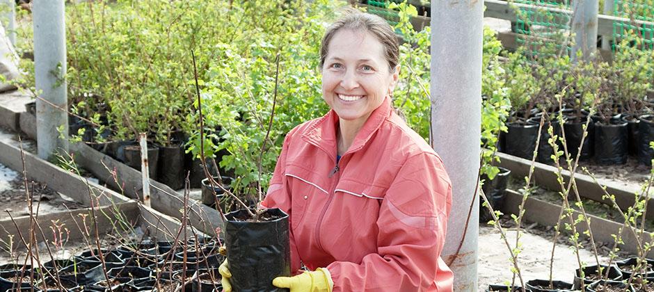 Trädgårdsmästare yrkeshögskoleutbildning