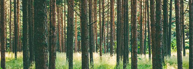 Maatalous-metsätieteen valmennuskurssi