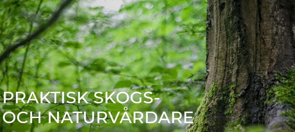 Praktisk skog- och naturvårdare / Hvilan Utbildning