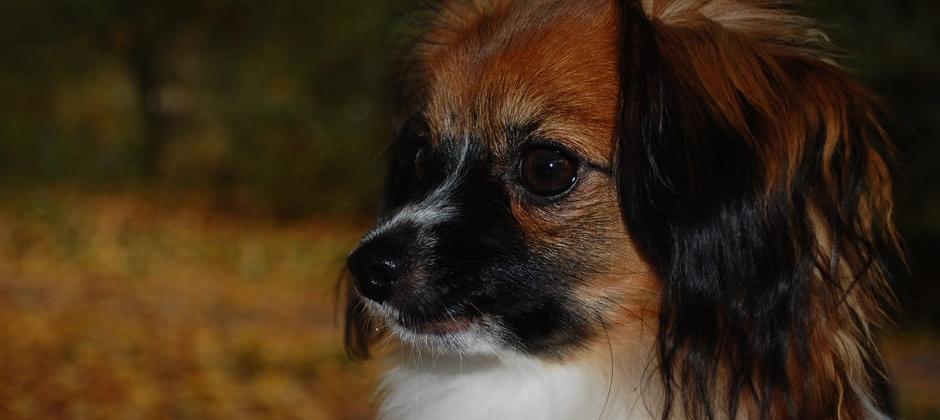 Maria Willers - Hundkurser
