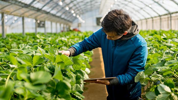 Ung man i växthus som sköter sin växtodling